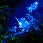 Blå belysning i naturen