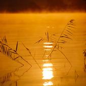 Vass i sjö