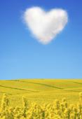 Hjärtformat moln ovanför rapsfält