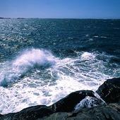 Vågor vid kust