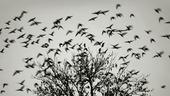 Fåglar som flyger bort från träd