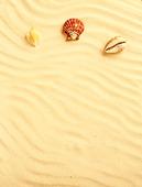 Exotiska snäckskal i sand
