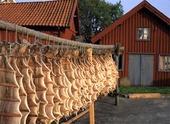 Långa på tork, Bohuslän