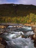 Fors vid Abisko, Lappland