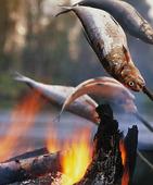 Lägereld med grillad fisk