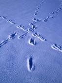 Harspår i snö