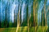 Idébild - oskarpa träd