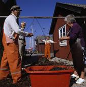 Fiskare rensar nät
