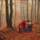 Skolklass i skogen