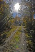 Skogsväg i motljus
