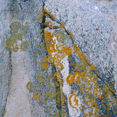Lav på klippa