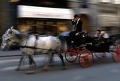 Häst och vagn i Wien, Österrike