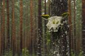 Djurskalle på träd