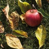 Äpple på marken