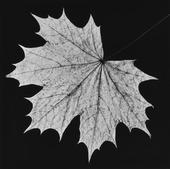 Lönnblad