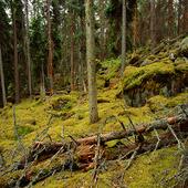 Urskog, Norra Kvills Naturpark