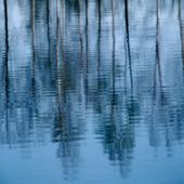 Träd som speglas i vattenyta