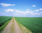 Grusväg genom fält