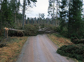 Stormskador i skog