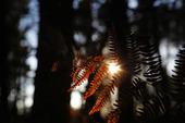 Solstrålar i skogen