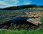 Timmerstockar i sjö