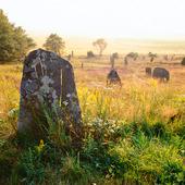 Gravfält vid Fjärås Bräcka, Halland