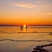 Pimpelfiske på havsis i solnedgång