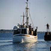 Fiskebåt i Bohuslän