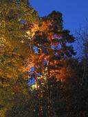 Belysta träd