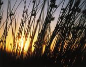 Solen i naturen