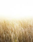 Frost i gräsäng