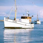 Fiskebåtar på västkusten