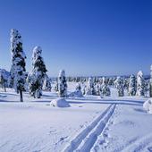 Skidspår i vinterlandskap