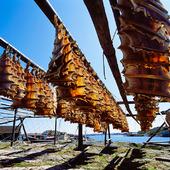 Spillånga på tork vid Mollösund, Bohuslän
