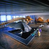 Naturhistoriska muséet, Göteborg