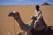 Kameldrivare i Egypten