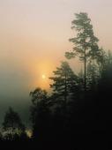 Soluppgång i skog