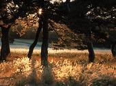 Träd på äng