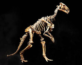 Skelett av dinosaurie