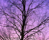 Grenverk på träd i skymning