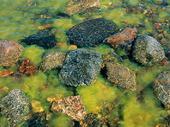 Stenar och sjögräs vi strandkant