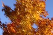 Träd i höstfärger