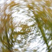 Trädgrenar i rörelse