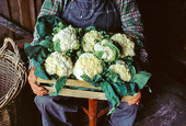 Bonde med nyskördad blomkål