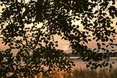 Lövträd vid insjö