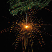 SPARKLER in Christmas tree