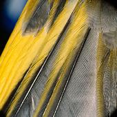 Fågelfjädrar