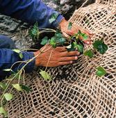 Planteringsnät