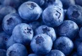 Nyplockade blåbär