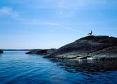Solbad på klippa, Bohuslän